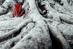 Adore con los palillos del incienso que ofrecen en las raíces del baniano Fotografía de archivo libre de regalías