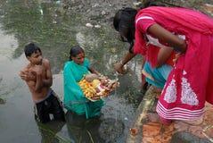 Adore en el agua contaminada Foto de archivo libre de regalías