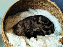 Adoreable black and brown cat sleepin in basket stock photos