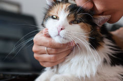 Adored cat. Petting the cat while staying at a laptop computer Stock Images
