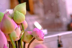 Adorez le lotus rose photographie stock