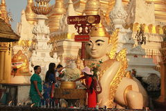 Adori il dio alla pagoda di Swedagon, Rangoon Myanmar Fotografia Stock Libera da Diritti