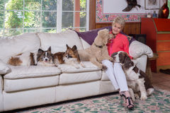 Adoring The Dogs Royalty Free Stock Photos