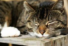 Adormecido calmo. Foto de Stock
