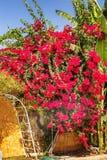 Adornó maravillosamente la casa brillante de las flores, seto fotos de archivo