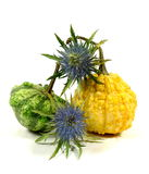 Adorn pumpkin with thistle Royalty Free Stock Images