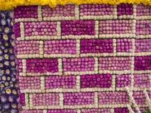 Adornado con la flor del amaranto púrpura Foto de archivo libre de regalías
