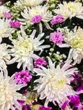 Adornado con las flores frescas Fotos de archivo