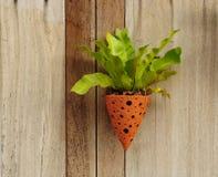 Adornado con las plantas en la pared Imagen de archivo libre de regalías