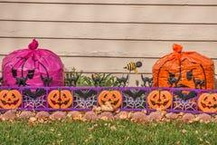 Adornado para Halloween Fotografía de archivo libre de regalías