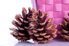 Adornamiento de conos del pino Imagen de archivo libre de regalías