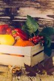 Adornamiento de la cosecha de la caída Todavía vida de la calabaza de invierno y del vegetab Fotografía de archivo libre de regalías