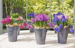 Adornamiento de ventanas con las flores Foto de archivo libre de regalías