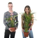 Adorne a casa con las plantas Imagen de archivo libre de regalías