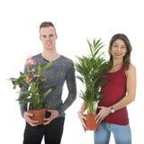 Adorne a casa con las plantas Foto de archivo libre de regalías
