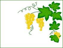 Adorne con los racimos de uvas. Fotografía de archivo