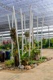 Adorne de poco jardín Fotografía de archivo libre de regalías