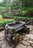 Adorne el jardín con el establecimiento de la col Foto de archivo libre de regalías