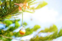 Adorne la caída en árbol de pino en luz caliente Foto de archivo