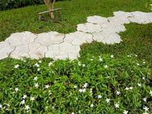 Adorne la calzada en el jardín con la hierba verde Imagen de archivo