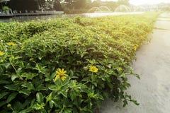 Adorne las hojas verdes en pueblo y puesta del sol Fotografía de archivo