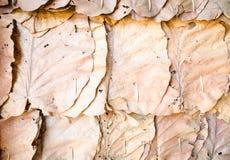 Adorne las paredes con el fondo seco de la textura de las hojas Foto de archivo