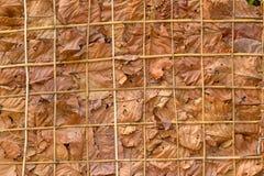Adorne las paredes con las hojas y el fondo secos Fotografía de archivo libre de regalías