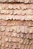 Adorne las paredes con las hojas secas Fotos de archivo libres de regalías