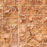Adorne las paredes con las hojas y el fondo secos Fotos de archivo