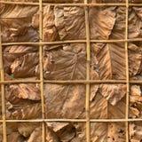 Adorne las paredes con las hojas y el fondo secos Foto de archivo libre de regalías