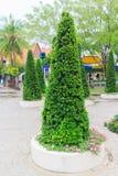 Adorne las plantaciones del árbol Imagen de archivo libre de regalías
