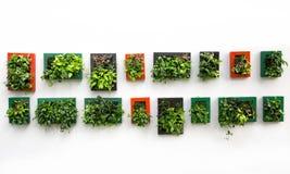 Adorne las plantas artificiales en marcos de la foto Fotos de archivo libres de regalías