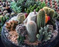 Adorne las plantas de desierto Imagen de archivo libre de regalías