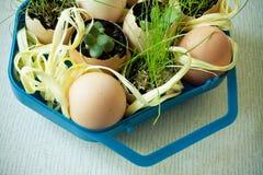 Adorne los huevos con una hierba Fotos de archivo libres de regalías