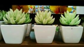 Adorne los potes de la planta Fotografía de archivo libre de regalías