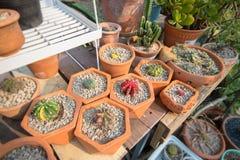 Adorne su hogar con el cactus fotos de archivo libres de regalías