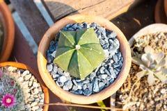 Adorne su hogar y jardín con el cactus fotografía de archivo