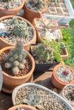 Adorne su jardín con el cactus fotografía de archivo libre de regalías