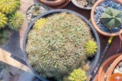 Adorne su jardín con el cactus foto de archivo libre de regalías