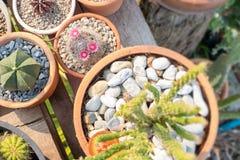 Adorne su jardín con el cactus imagenes de archivo