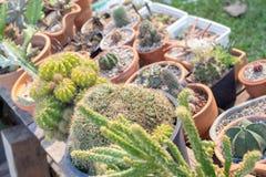 Adorne su jardín con el cactus foto de archivo
