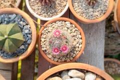 Adorne su jardín con el cactus fotografía de archivo