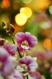 Adorne un partido con las orquídeas Foto de archivo libre de regalías