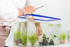 Adorne y acuario en casa Imagen de archivo
