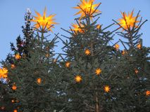 Adorned with Christmas. Firs with stars on a Christmas fair Stock Photography