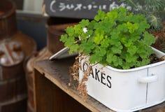 Adornment Stock Photos