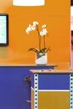 Adorno de la orquídea Foto de archivo libre de regalías