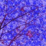 Adorno Digital Art Collage de la naturaleza Imagenes de archivo
