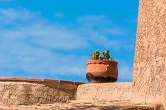 Adorno mediterráneo, maceta con el cactus Foto de archivo