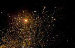 Adorno otoñal con las ramas de árbol mojadas, Foto de archivo libre de regalías
